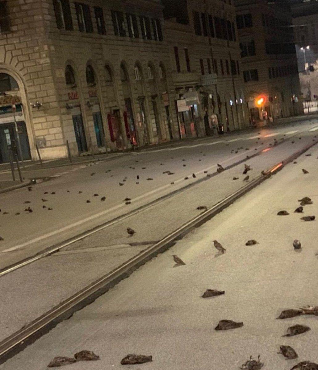 İtalyanlar yeni yıla kuş katliamı ile girdiler