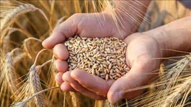 Tarım sektörünün modernizasyonu, gıda güvenliğini de teminat altına alacaktır