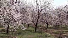"""Malatya'da """"Kayısı Çiçeği"""" temalı özçekim yarışması yapılacak"""