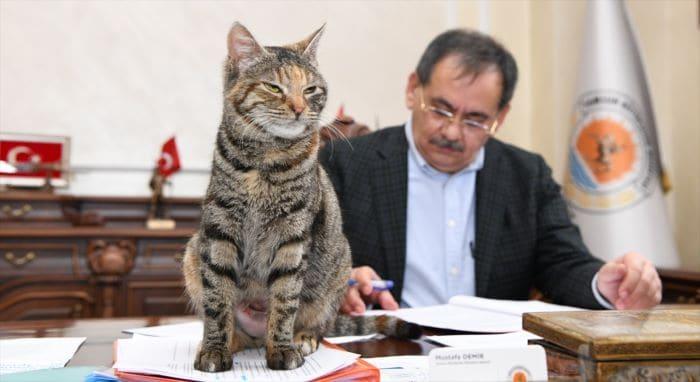 Samsun Büyükşehir Belediye Başkanı Demir'in kedi sevgisi