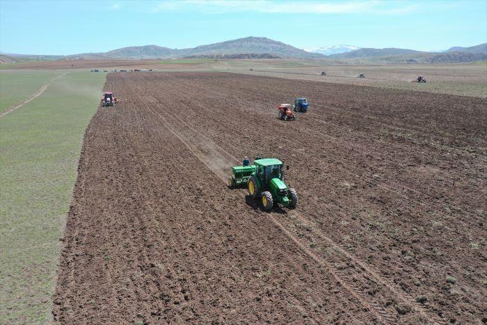 Sivas'ta mor patatesin ekimine başlandı