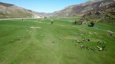 Bitlis'te meralar koyun sürüleriyle şenlendi