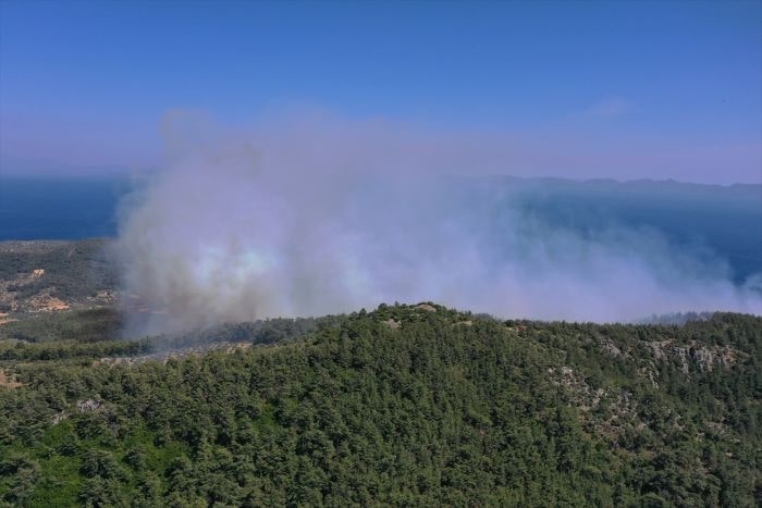 Milas'ta ormanlık alandaki yangın