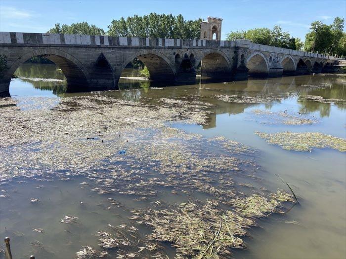 Tunca Nehri'nin bazı kesimlerinde yosunlar yüzeye çıktı