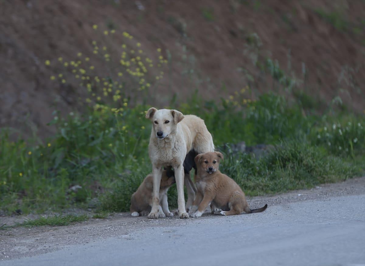 Anne köpeğin isyanı