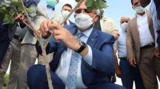 Diyarbakır'da sert kabuklu meyve üretimi artırılacak