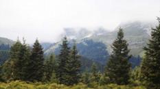 Ilgaz Dağı'nda oluşan sis görsel şölen sundu