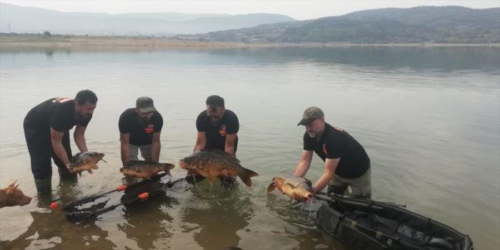 ASOF Türkiye 2021 Sportif Sazan Balığı Yarışması Bolu'da yapılacak