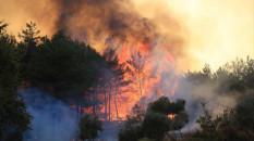 Muğla'da yangın nedeniyle dört yerleşim yeri boşaltıldı