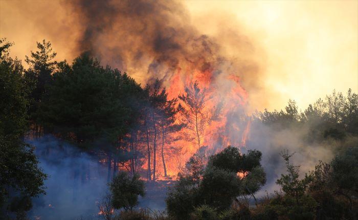 """Yangın bölgelerinde """"mücbir sebep hali"""" ilan edildi"""