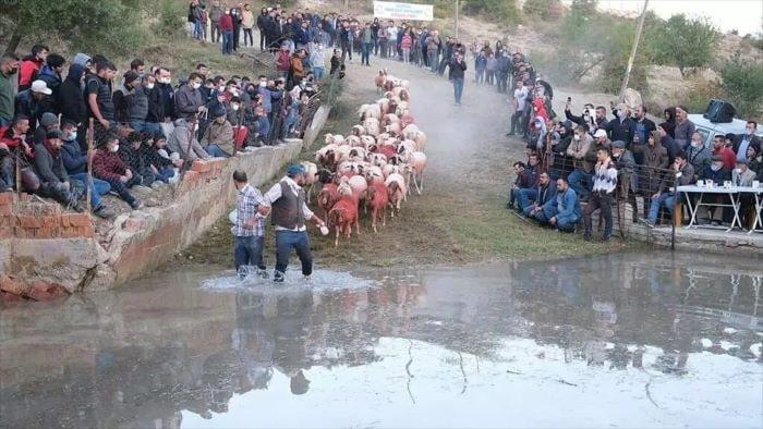 """Burdur'un 750 yıllık """"sudan koyun geçirme"""" geleneği"""