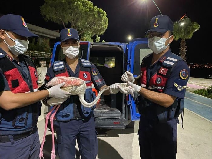 İzmir'de yaralı flamingoya jandarma ekipleri sahip çıktı