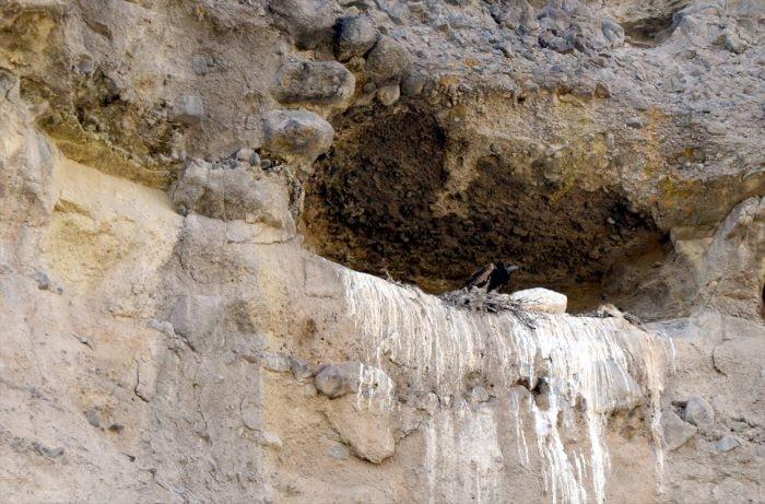 Sarıkamış küçük akbabaların üreme yerlerinden biri