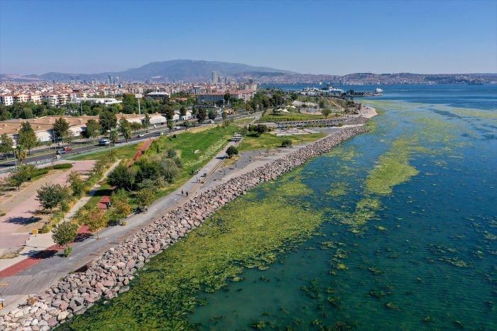İzmir Bostanlı'da sahili deniz marulu kapladı