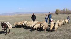 Koyun ve keçi yetiştiricilerine destek rakamları artırıldı