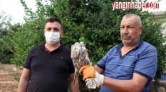Mersin'de 'Beyaz Şahin' besleyene para cezası